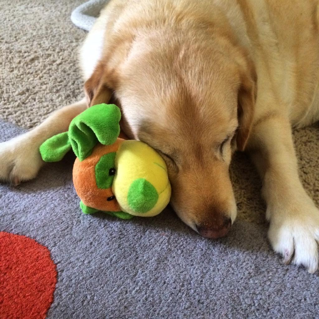 mad toy sleep