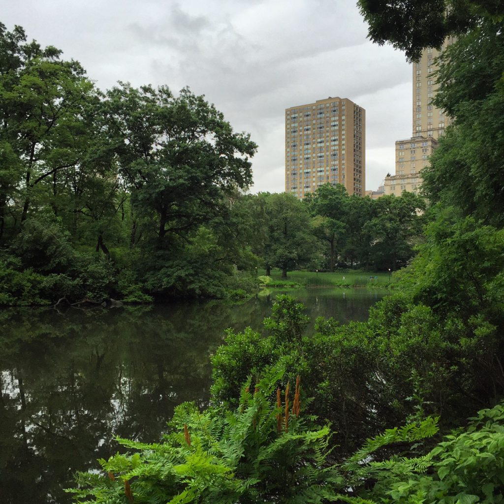 Central Park in the Rain