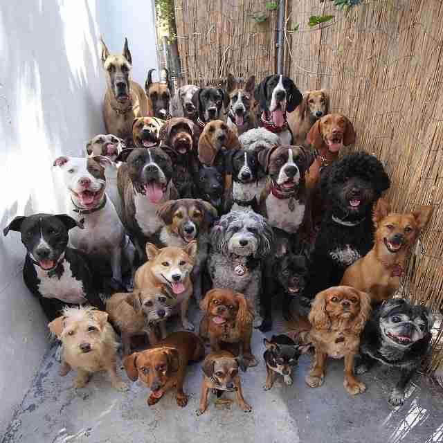 Doggone It…