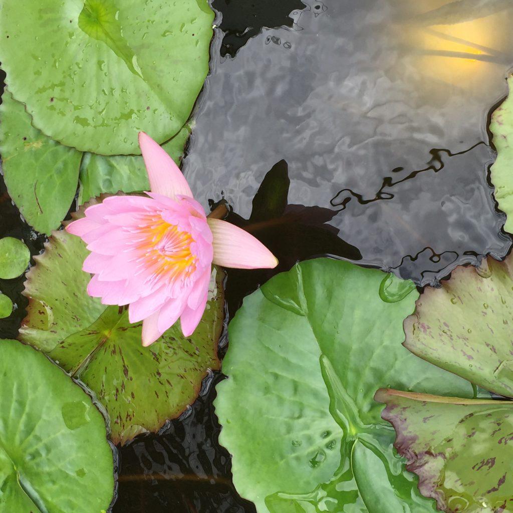 Virginia Overton Gardens